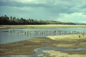 Safari in the Selous