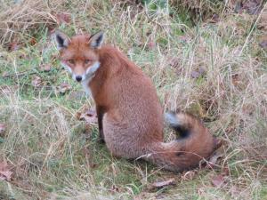 fox, nov 5, 2020